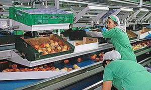 La balanza comercial extremeña obtuvo un saldo positivo de 521 millones durante el ejercicio del 2013