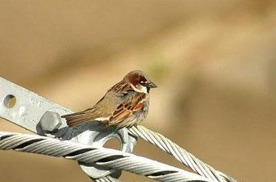 Plasencia presentará en FIO un folleto bilingüe sobre aves que podrá utilizarse como cuaderno de campo