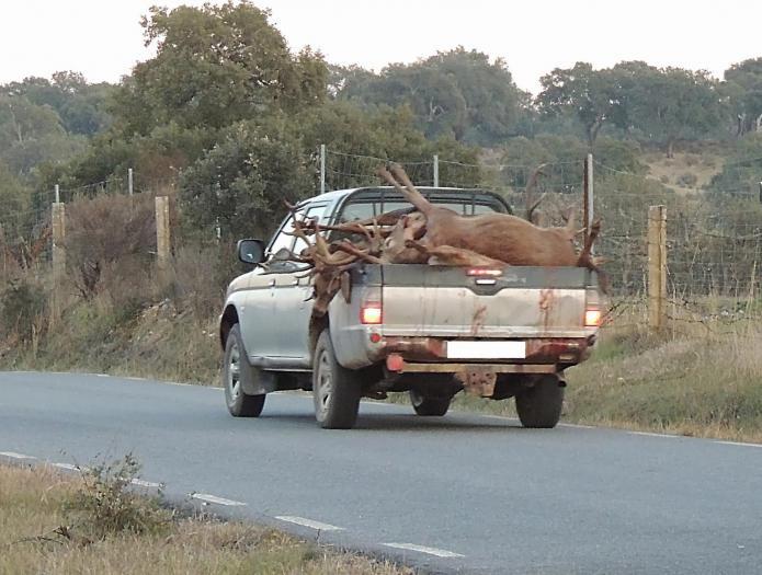 Ecologistas Extremadura denuncia al Gobierno regional por posible delito en la montería de Monfragüe