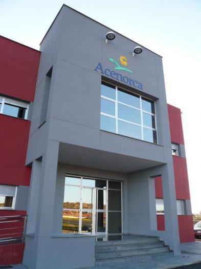 La cooperativa Acenorca exporta el 65% de su producción de aceitunas a una veintena de países