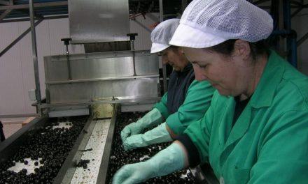 La cooperativa Acenorca logra los certificados de calidad, medio ambiente y seguridad alimentaria