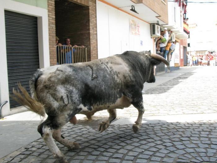 Moraleja promociona San Buenaventura en la I Feria Internacional del Toro de Coria