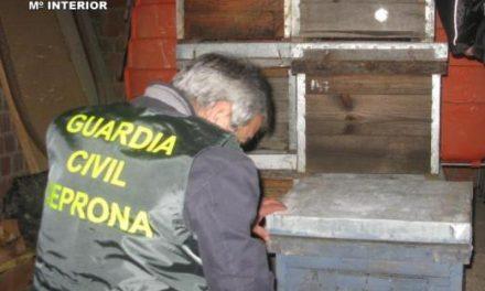 La Guardia Civil detiene en Hervás a un hombre acusado de robar colmenas en siete explotaciones apícolas