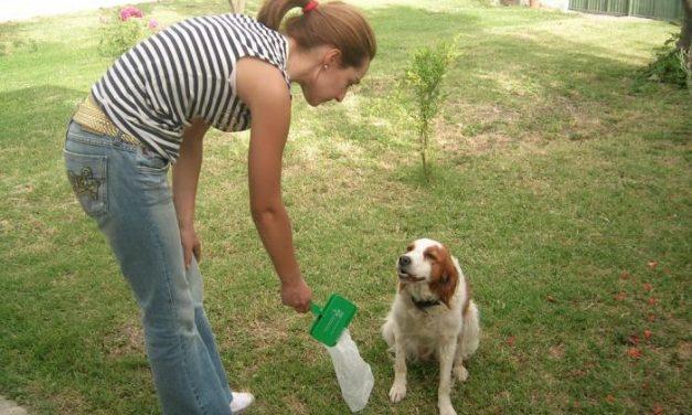 El Espacio para la Creación Joven de Moraleja ofrece un curso de adiestramiento canino