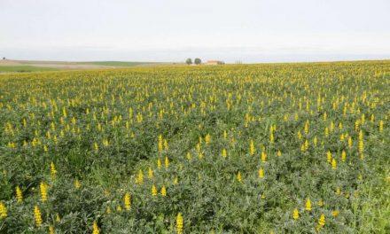 Cicytex organiza una jornada alternativas para mejorar la producción y calidad de los pastos ganaderos