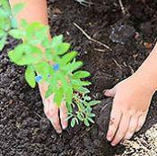 Moraleja anuncia que plantará un árbol por cada bebé nacido durante el pasado año