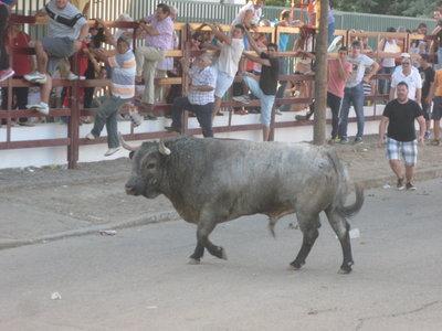 Los festejos taurinos de Puebla de Argeme concluyen con dos heridos por asta de toro