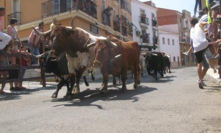 Abierto el proceso para contratar la organización de los festejos taurinos de San Buenaventura de Moraleja