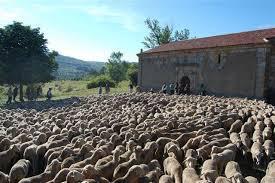 Agricultura somete a información pública las labores de deslinde en vías pecuarias en Carbajo