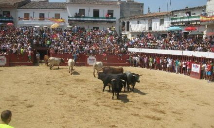Moraleja celebra una reunión este viernes para organizar el traslado de los bueyes en San Buenaventura