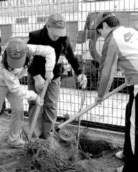 Los alumnos de colegios y del instituto de Villanueva de la Serena plantarán 60 árboles en el Día del Árbol