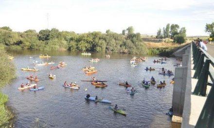 Cerca de 700 aficionados participan en el descenso en piragua por aguas del río Alagón