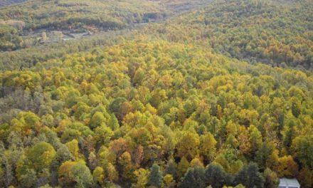 Medio Ambiente declarará Paisaje Protegido del Monte Público Castañar Gallego de Hervás