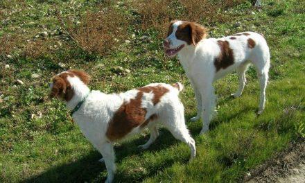 El 90% de los animales abandonados por sus dueños mueren en la perrera o en accidentes
