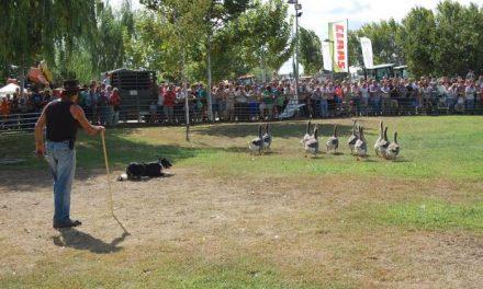 La exhibición de perros pastor y la elaboración de queso congregan numeroso público en la Feria Rayana