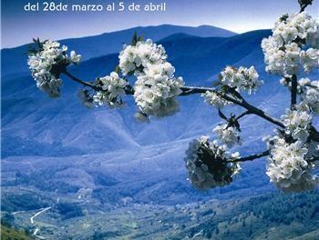 La Junta anima a todos los extremeños a disfrutar de la fiesta del Cerezo en Flor en el Valle del Jerte