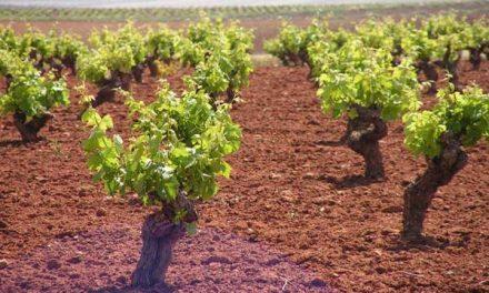 Agricultura destina 2,5 millones de euros para las ayudas a los subproductos de la vinificación