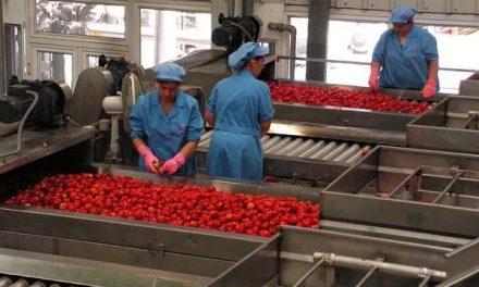 El Laboratorio Agroalimentario realiza 40.000 análisis durante la campaña de tomate