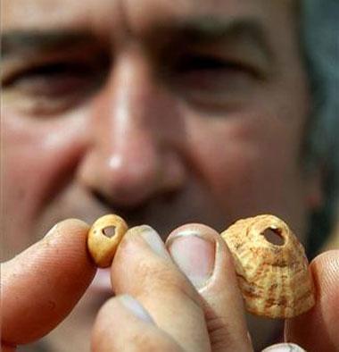 Los investigadores hallan en la cueva de Maltravieso dos conchas marinas con 22.000 años de antigüedad