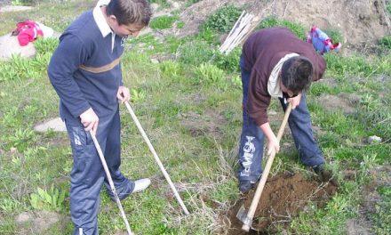 La dehesa de Montehermoso acogió la primera actividad de reforestación de «Primavera en la dehesa»