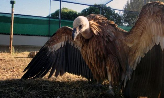 El Centro de Recuperación de Fauna Salvaje de AMUS agradece al Gobierno extremeño su gran ayuda