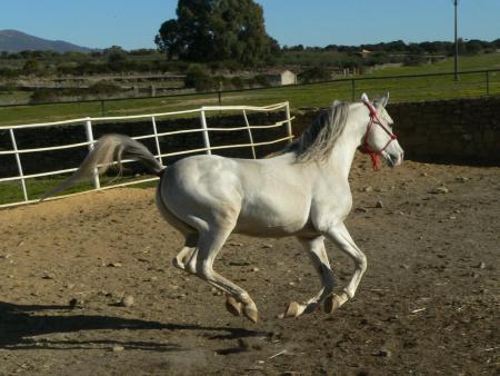 Toril ultima los preparativos para celebrar este fin de semana las carreras de caballos en honor a San Blas
