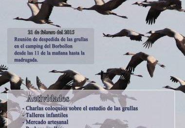 Moraleja despedirá la temporada de avistamiento de grullas el día 21 en el pantano de Borbollón