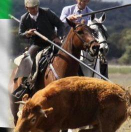 Moraleja acogerá en abril el XXIX Campeonato de Extremadura de Acoso y Derribo