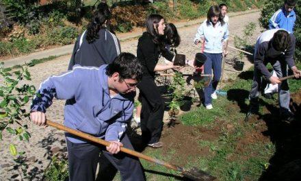 Los alumnos de cinco institutos de la comarca del Valle del Alagón plantan un total de 400 encinas