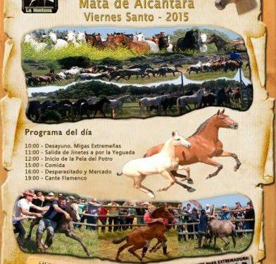 La localidad de Mata de Alcátara se prepara para celebrar la Pela del Potro este Viernes Santo