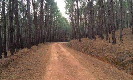 Cerca de 78.000 hectáreas de montes de utilidad pública han sido ordenadas en Extremadura desde 2011