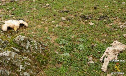 Medio Ambiente aprueba la estrategia extremeña contra el uso ilegal de cebos envenenados