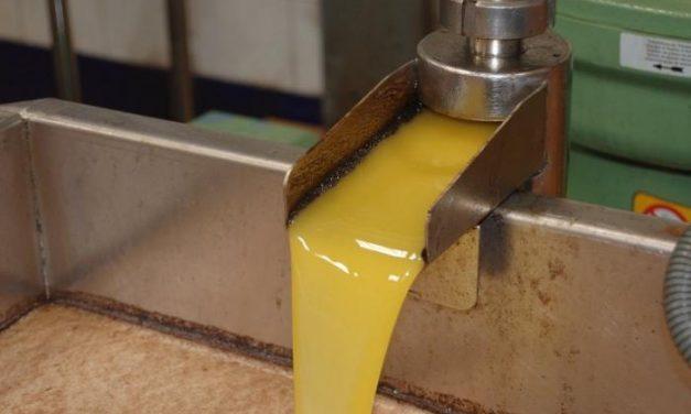 La Escuela de Hostelería de Extremadura realizará una cata con aceite de la Denominación Monterrubio