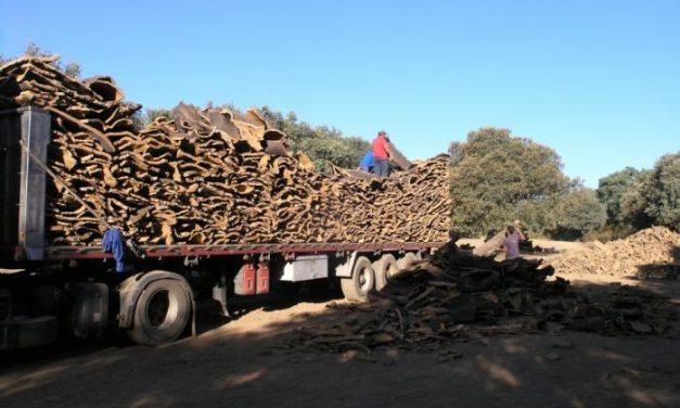 La campaña de corcho en Extremadura comienza con la expectativa de buenos precios en el mercado