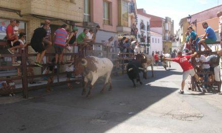 El astado de la Comisión de Festejos protagoniza el encierro más largo de San Buenaventura