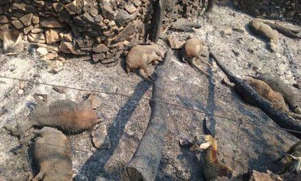 El Infoex mantiene activo el Nivel 2 en el incendio de Sierra de Gata mientras la situación se estabiliza