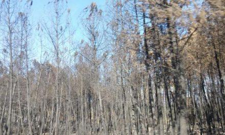 """Ecologistas en Acción califica de """"desastre ecológico, social y económico"""" el incendio que asola la Sierra de Gata"""