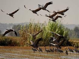 Extremadura expone su excelencia ornitológica en la mayor feria internacional del turismo de naturaleza