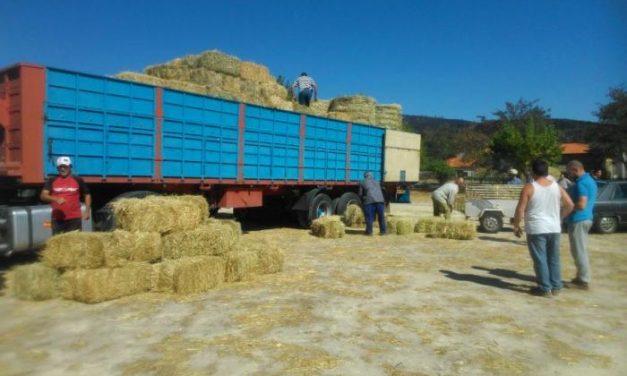 La Diputación de Cáceres realiza una segunda entrega de heno a los ganaderos de la Sierra de Gata