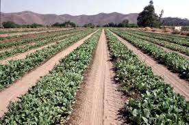 Más de 3.000 agricultores reciben 10 millones en ayudas agroambientales y de forestación de la Junta