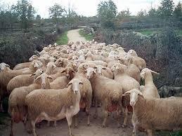 La localidad de Casar de Cáceres contará con la primera escuela de pastores de la región