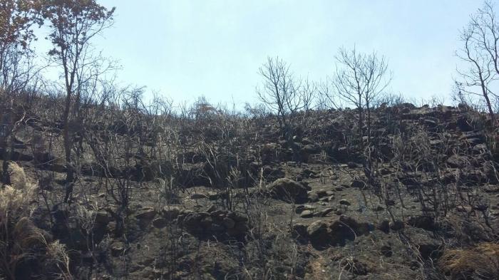 """La reforestación """"en mosaico"""" podría convertirse en la clave de la gestión forestal en Sierra de Gata"""