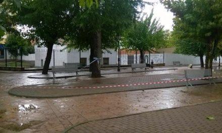 El consistorio de Moraleja acordona parte del parque Alfanhuí por desprendimiento de ramas