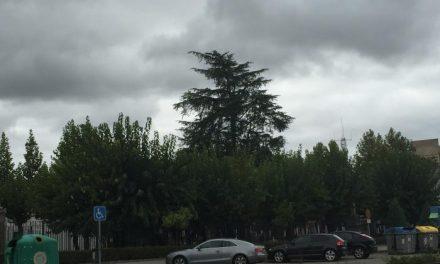 El Ayuntamiento de Moraleja revisará el arbolado del Parque Alfanhuí para evaluar su estado