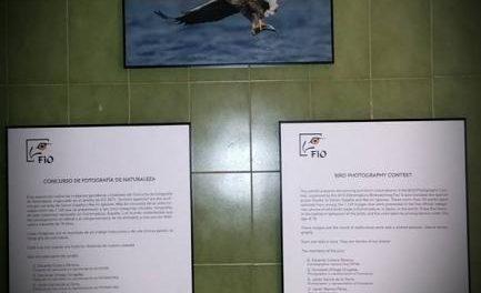 El Colegio Cervantes de Moraleja acoge hasta este viernes una exposición fotográfica sobre ornitología