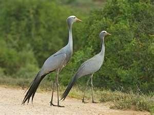 Las IV Jornadas Ornitológicas Moraleja Vuela contarán con 2.000 euros de inversión de la Junta