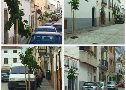 La calle Corredera de Coria cuenta con una veintena de naranjos como nuevos elementos ornamentales