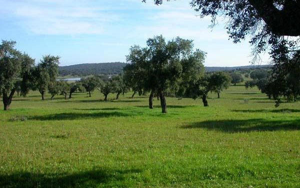 Extremadura expone en Londres la gastronomía, la cultura, el turismo de salud y la naturaleza