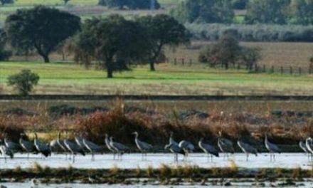 Herrero destaca el turismo ornitológico como un valioso dinamizador del comercio en Moraleja
