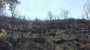 La Junta destina más de 2.500.000 euros para paliar los efectos del incendio en Sierra de Gata